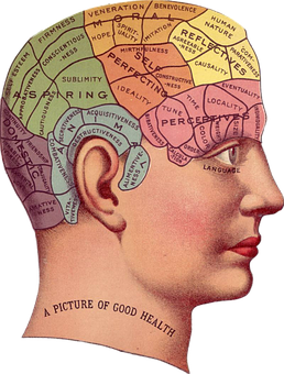 brain thinking areas