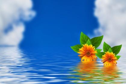 flowers-3584912_1280