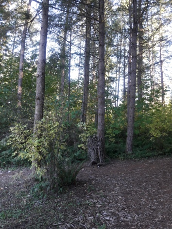 treespath2
