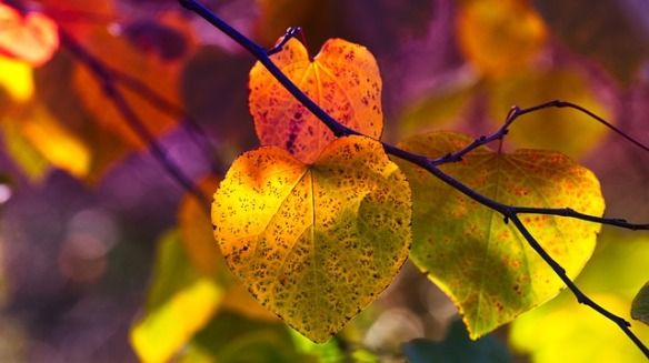 autumn-leaves-3813741_640