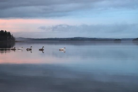 swan-398663_640
